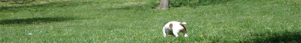 moriken.org header image 2