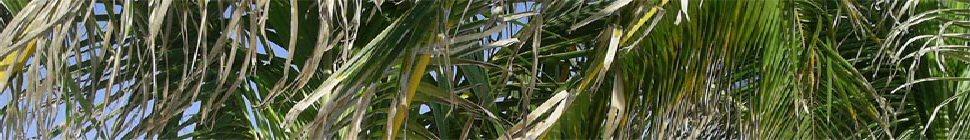 moriken.org header image 3